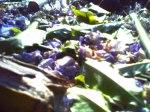 25_abril_2011_reggio_harinezumi (96) [800x600]