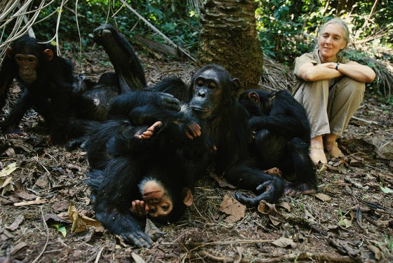 proof-jane-goodall-128400